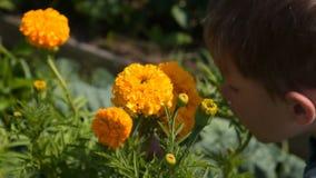 Μυρίζοντας λουλούδι παιδιών στον κήπο απόθεμα βίντεο