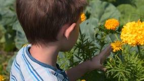 Μυρίζοντας λουλούδι παιδιών στον κήπο φιλμ μικρού μήκους