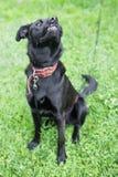 Μυρίζοντας σκυλί Στοκ εικόνες με δικαίωμα ελεύθερης χρήσης