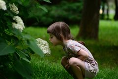 Μυρίζοντας όμορφο λουλούδι Στοκ Φωτογραφία