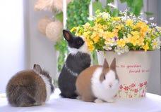 Μυρίστε το κουνέλι λουλούδι-Pet στοκ εικόνα με δικαίωμα ελεύθερης χρήσης