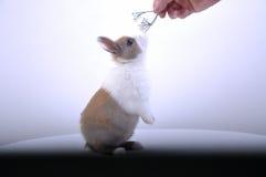 Μυρίστε το κουνέλι λουλούδι-Pet στοκ εικόνες