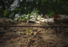 Μυρμήγκια και θήραμα πυρκαγιάς Στοκ φωτογραφία με δικαίωμα ελεύθερης χρήσης