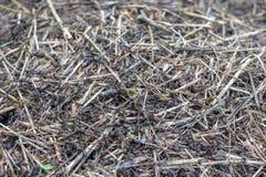 Μυρμήγκια και μυρμηγκοφωλιά Στοκ Εικόνες