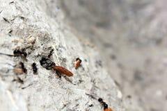Μυρμήγκια με το ψωμί Στοκ φωτογραφία με δικαίωμα ελεύθερης χρήσης