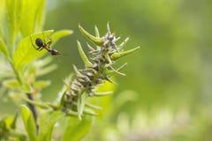 Μυρμήγκια - περιέργεια Στοκ εικόνα με δικαίωμα ελεύθερης χρήσης