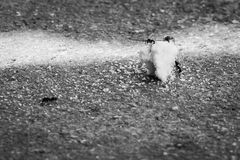 Μυρμήγκια που επιτίθενται crumbs τροφίμων Στοκ Εικόνα