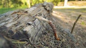Μυρμήγκια που ζουν σε ένα ξύλινο κούτσουρο κάτω από το ραβδί στο δασικό λιβάδι μια ηλιόλουστη ημέρα απόθεμα βίντεο