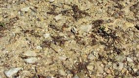 Μυρμήγκια που περπατούν γύρω σε μια μεγάλη μυρμηγκοφωλιά στο δάσος απόθεμα βίντεο