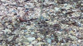 Μυρμήγκια που περπατούν γύρω στο έδαφος του δάσους απόθεμα βίντεο