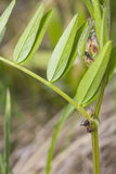 Μυρμήγκια - που περπατούν μεταξύ των όμορφων φύλλων Στοκ Εικόνες