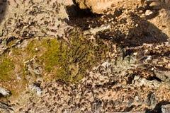 Μυρμήγκια που σκάβουν σε ένα παλαιό δέντρο Στοκ φωτογραφίες με δικαίωμα ελεύθερης χρήσης