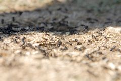 Μυρμήγκια που τακτοποιούν τις φωλιές στοκ εικόνες με δικαίωμα ελεύθερης χρήσης