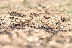 Μυρμήγκια που τακτοποιούν τις φωλιές στοκ εικόνες