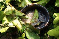 Μυρμήγκια που φέρνουν τη διαφυγή αυγών στοκ εικόνα