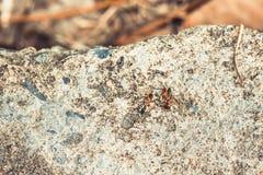 Μυρμήγκια στα κινούμενα τρόφιμα εργασίας μια έννοια ομαδικής εργασίας για το υπόβαθρο Στοκ Εικόνες