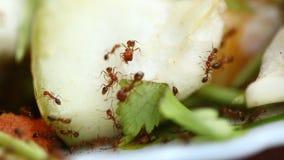 Μυρμήγκια στην πικρή κολοκύθα λαχανικών φιλμ μικρού μήκους