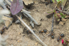 Μυρμήγκια - το καθένα είναι πολυάσχολο με την επιχείρησή τους Στοκ φωτογραφία με δικαίωμα ελεύθερης χρήσης