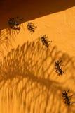 μυρμήγκια Στοκ Φωτογραφίες