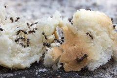 Μυρμήγκια. Στοκ Φωτογραφία