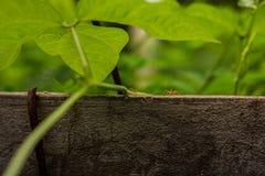 Μυρμήγκι ο τρόπος Στοκ Φωτογραφίες