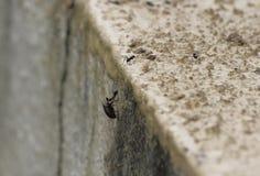 Μυρμήγκι που ανυψώνει μια μύγα στοκ φωτογραφίες