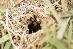 Μυρμήγκι που εργάζεται garding η μακρο φωτογραφία φωλιών Στοκ εικόνα με δικαίωμα ελεύθερης χρήσης