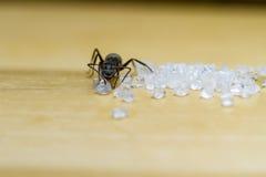 Μυρμήγκι που τρώει τη ζάχαρη Στοκ Φωτογραφίες