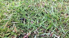 Μυρμήγκι που τρώει το μυρμήγκι φιλμ μικρού μήκους