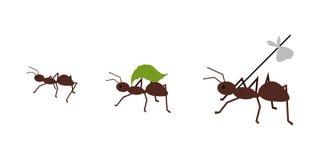 Μυρμήγκι που φέρνει τις αποσκευές της Στοκ φωτογραφίες με δικαίωμα ελεύθερης χρήσης