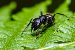 Μυρμήγκι σε μια φτέρη Στοκ εικόνες με δικαίωμα ελεύθερης χρήσης
