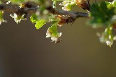 μυρμήγκι Στοκ εικόνα με δικαίωμα ελεύθερης χρήσης