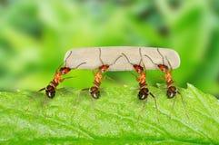 Μυρμήγκι Στοκ φωτογραφία με δικαίωμα ελεύθερης χρήσης