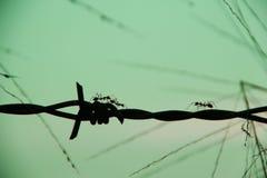 Μυρμήγκι Woker στοκ φωτογραφίες με δικαίωμα ελεύθερης χρήσης