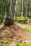 μυρμηγκοφωλιά Στοκ εικόνες με δικαίωμα ελεύθερης χρήσης