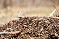 Μυρμηγκοφωλιά Στοκ Φωτογραφίες