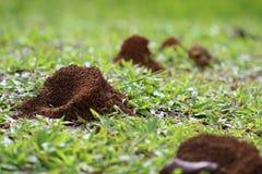Μυρμηγκοφωλιά Στοκ Εικόνα