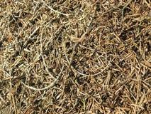 μυρμηγκοφωλιών Στοκ εικόνα με δικαίωμα ελεύθερης χρήσης