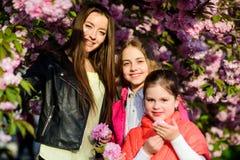 Μυρωδιά ανθών, αλλεργία Αδελφότητα r : οι ευτυχείς αδελφές στο κεράσι ανθίζουν E r στοκ εικόνες