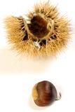 μυρωδιά 004 φθινοπώρου Στοκ Εικόνες
