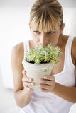 μυρωδιά φυτών Στοκ Εικόνες