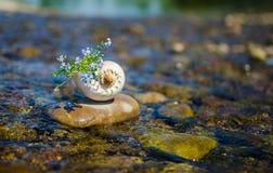 Μυς στο νερό με μια ανθοδέσμη Στοκ φωτογραφίες με δικαίωμα ελεύθερης χρήσης