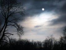 Μυστήρια δασική νύχτα στο δάσος Στοκ Εικόνα