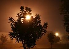 Μυστήρια νύχτα με το φως ομίχλης στοκ εικόνες