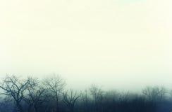 Μυστήρια ομίχλη πέρα από ένα χειμερινό δάσος Στοκ Φωτογραφίες