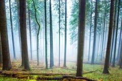 Μυστήρια ομίχλη στο πράσινο δάσος Στοκ Εικόνα