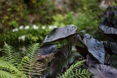 Μυστήρια φύλλα Στοκ Εικόνα