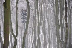 Μυστήριες σκιαγραφίες των δέντρων στην ομίχλη Στοκ φωτογραφία με δικαίωμα ελεύθερης χρήσης