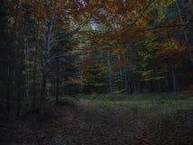 Μυστήριος δασικός δρόμος φθινοπώρου στο αμυδρό φως σούρουπου με το πορτοκάλι στοκ εικόνες