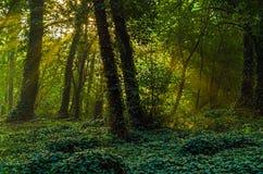 Μυστήριος δασικός κήπος κισσών στην ανατολή Στοκ φωτογραφία με δικαίωμα ελεύθερης χρήσης